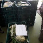 Food crate at distribution centre