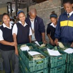 Ned Doman Kids examining organic veg boxes