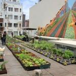 Roof garden @ Priority Zone